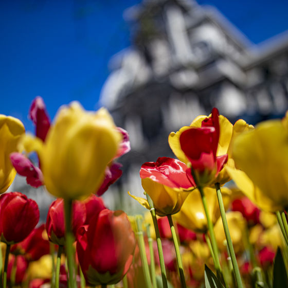 Photo of flowers with a building blurred in the background